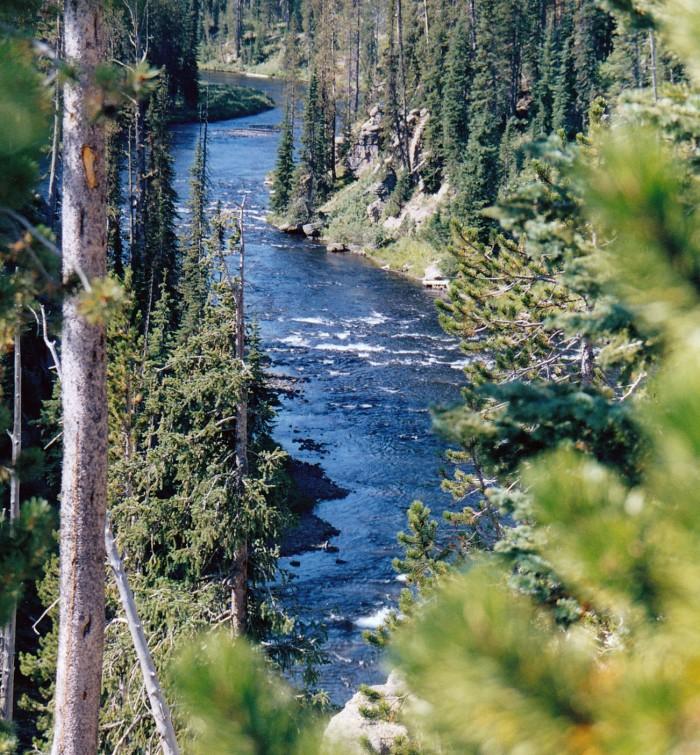 Yellowstone fiume
